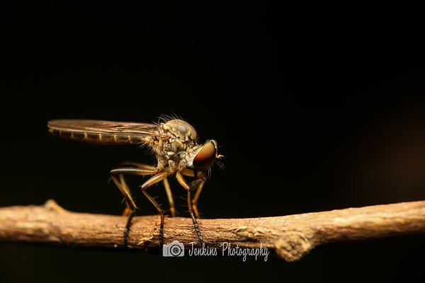 2012-12-30 Telok Blangah Hill Park