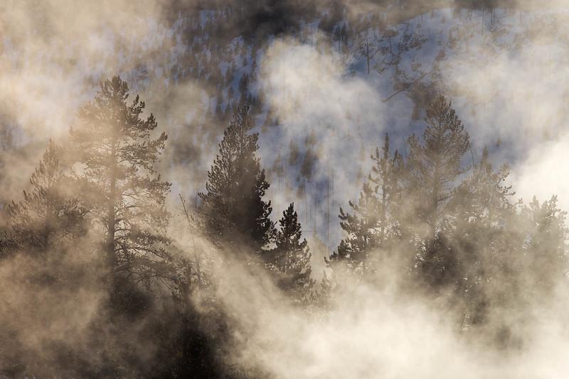 Backlit Fog