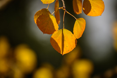 Fall Color Photoshoot #1