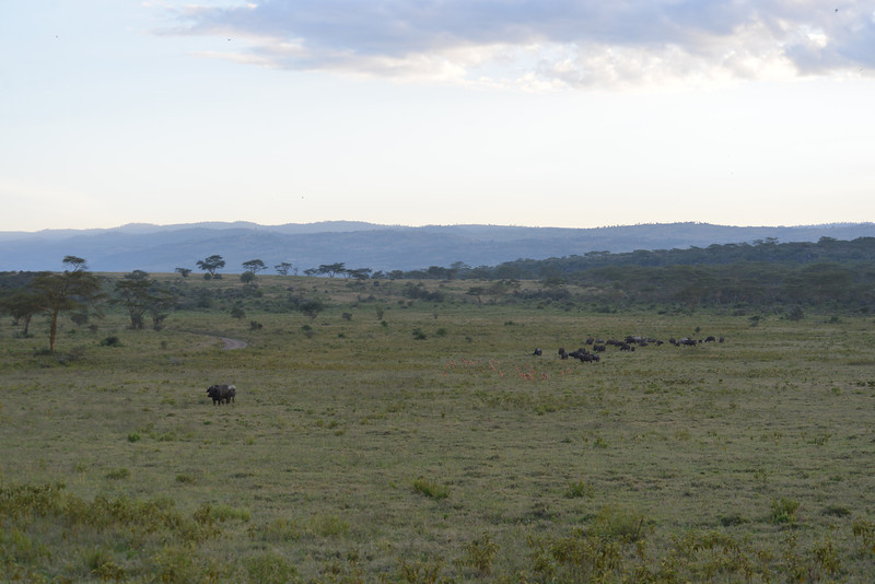 East Africa Safari 132.jpg