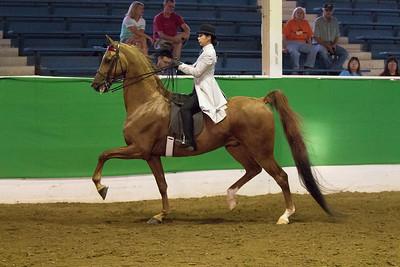 61 - Reg. American Saddlebred Country Pleasure English 18 & over