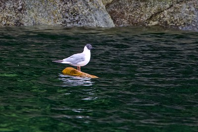Kayaking the Great Bear Rainforest