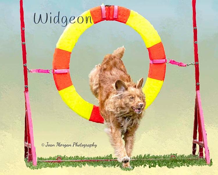 WidgeonB2.jpg