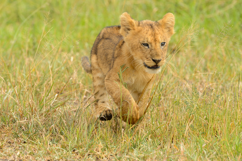 20160212_0049_Serengeti_Day_4.jpg