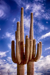 590815 Arizona Desert & Grand Canyon