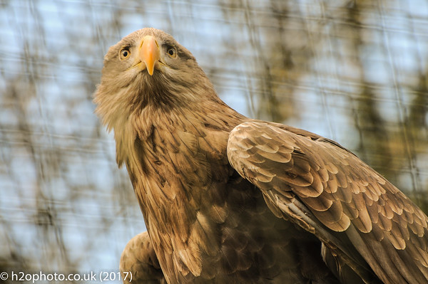 The Hawk Conservancy (04-Mar-17)