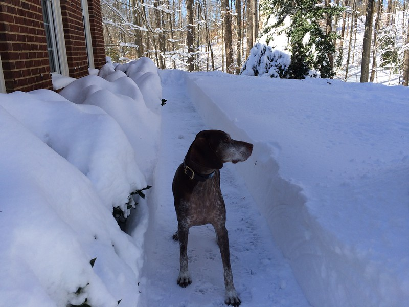 2016.01.16 - Morgen inspecting snow removal 2.JPG