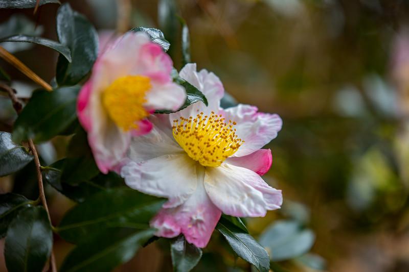 FlowerRedWingPark-001