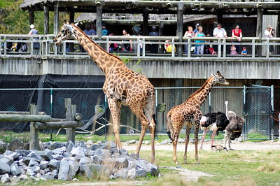 Virginia Zoo April 2018