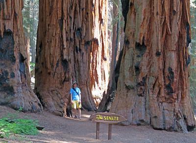 16 Sequoia National Park, June 20