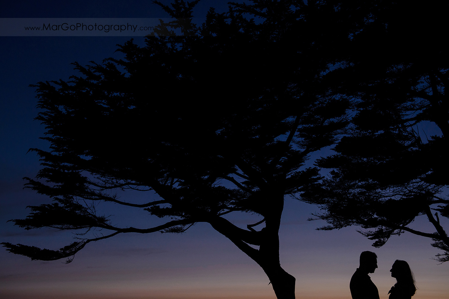 little people silhouette of man and woman looking at each other under big tree during engagement session at San Francisco Lands End