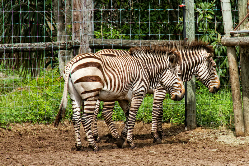 R_Tampa_Zoo-378-Edit.jpg