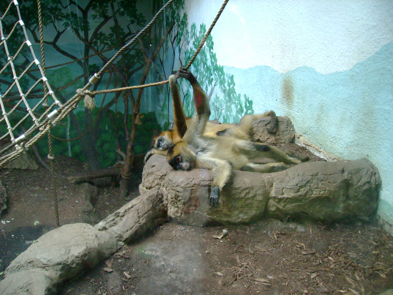 Resting primates.