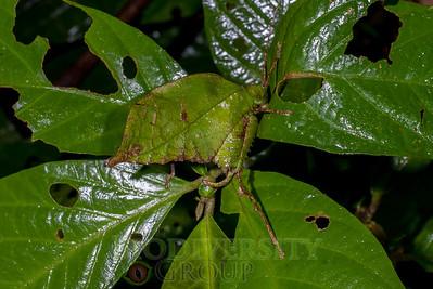 Best Invertebrates