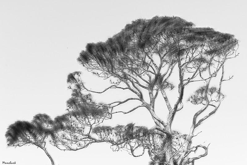 Treepictoral_DSC8169-copy.jpg