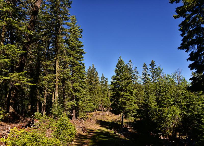 NEA_2254-7x5-Lincoln Nat Forest.jpg