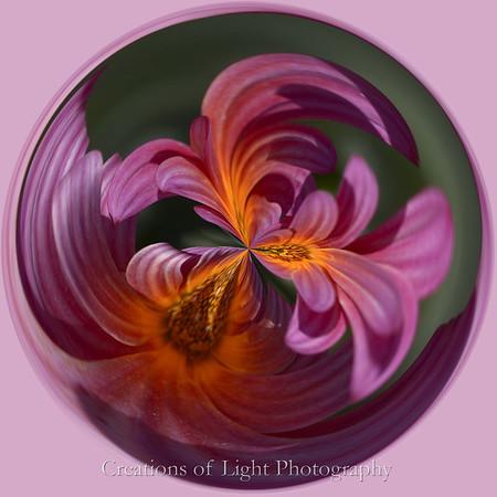 Spirals of Life III
