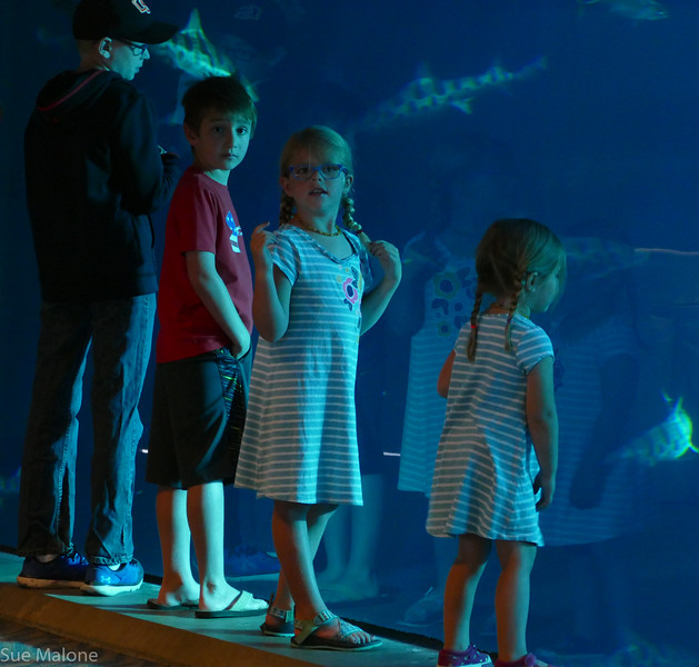 Rogers memorial at the aquarium (4 of 71).jpg
