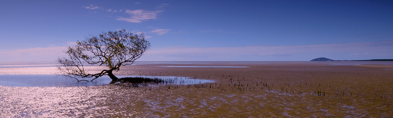 Cooya Beach Tree