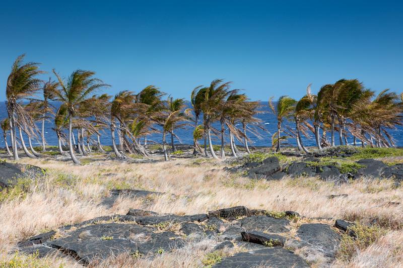 Hawaii - 061512 - 129.jpg