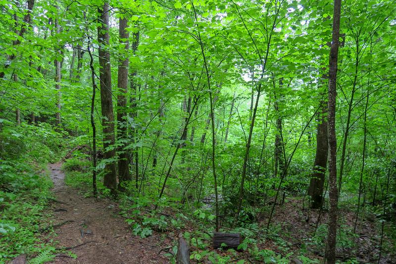 Barnett Branch Trail -- 3,570'