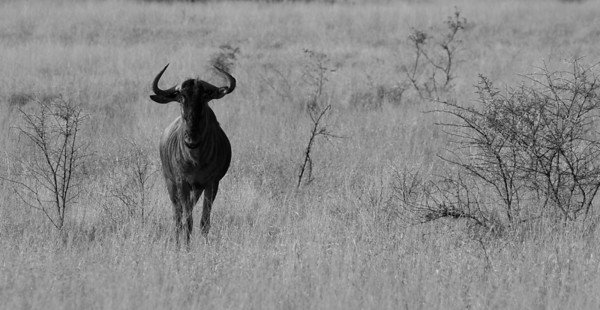 Wildlife - Black & White