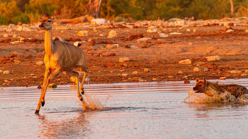 Kudu escape 3