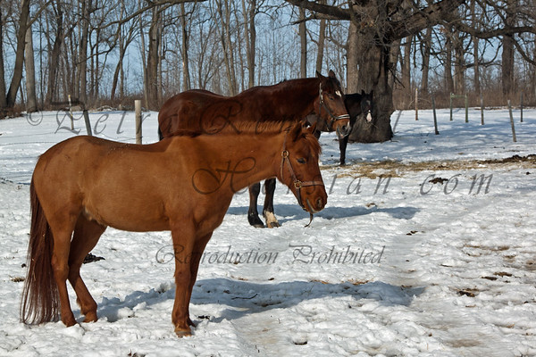 An incredibly warm and sunny day - first time, the horses get turned out without blankets this winter.