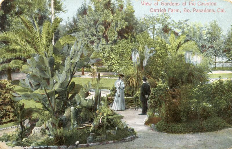 Ostrich Farm Gardens
