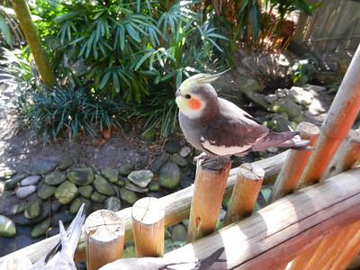 brevard zoo 2-9-13