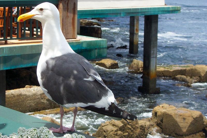 bird on the raiing.jpg