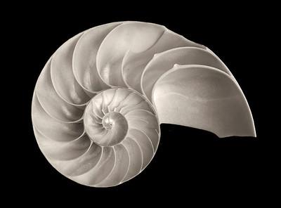 Shells and Skulls