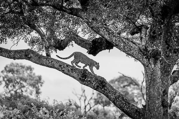 Kruger National Park 2020