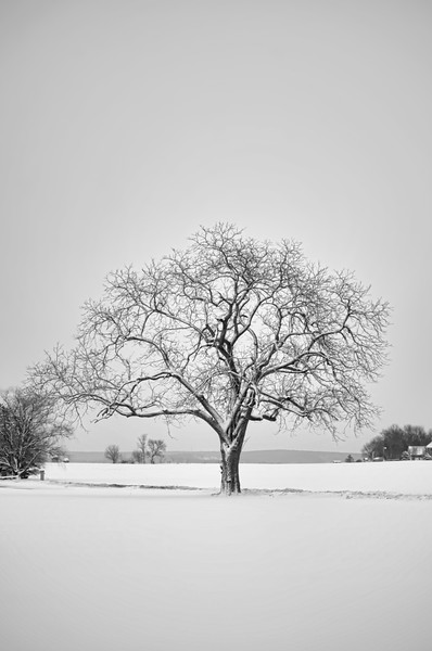 225 snow - frozen tree(p,topazbnw, site) copy.jpg