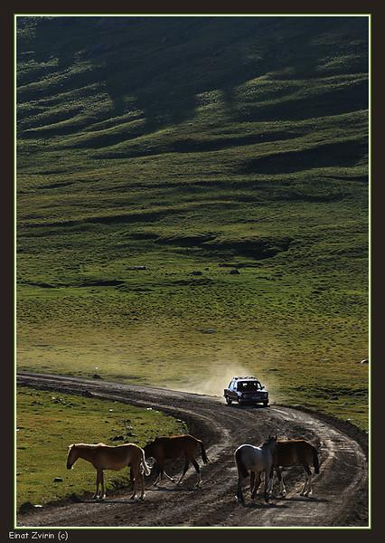 2016-07-20_2284 Car and Horses.jpg