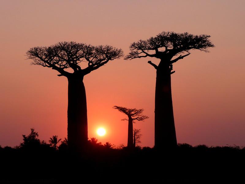008_0267 Baobab sunset.jpg