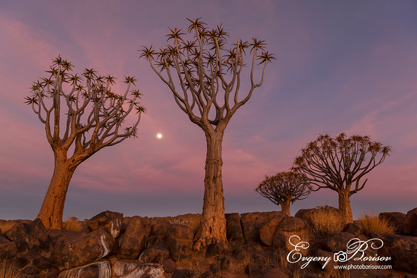 Quiver forest