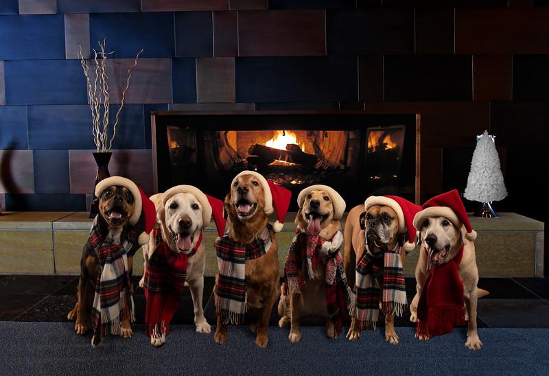 Fireplace Dogs.jpg