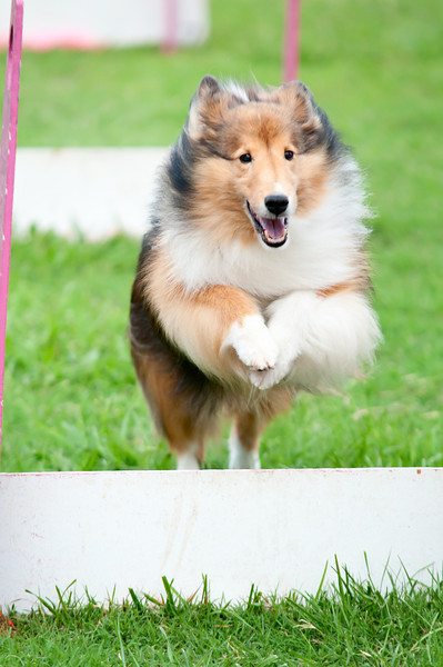 2011 Bark in the Park-117.jpg