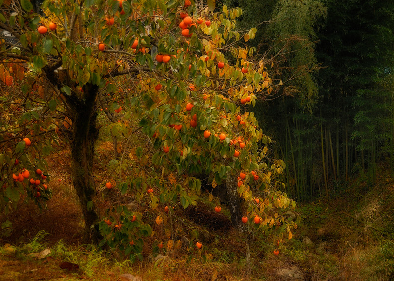 Persimmons and Bamboo