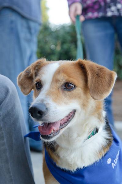 20110312 PetSmart Adoption Event-33.jpg