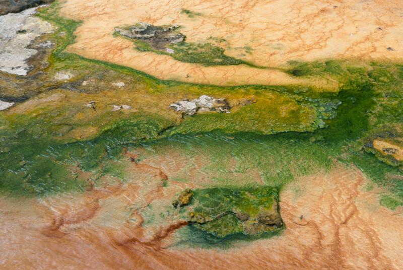 Koryto Teplé s betonovou deskou pokrytou mineralizací z odtékajícího Vřídla + termofilní řasy
