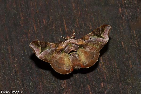 Papillons de l'Equateur, suite
