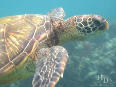 2006-04 Snorkeling