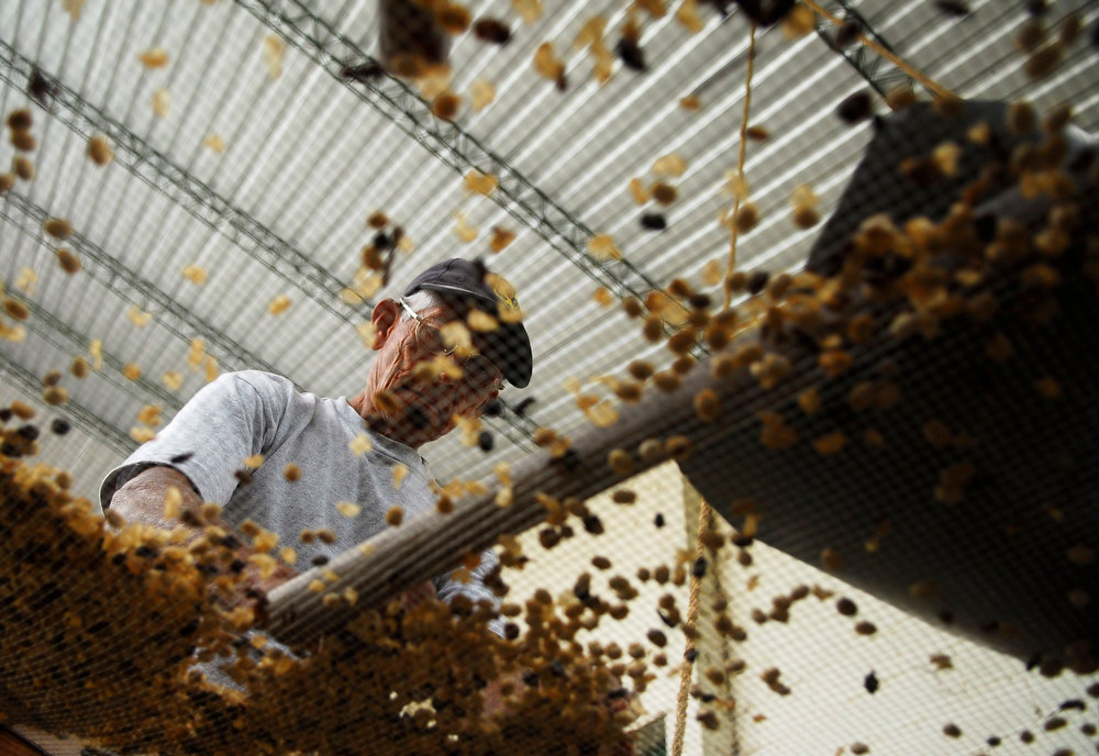 . A worker sorts dried coffee beans at the Santa Adelaida coffee cooperative in La Libertad, on the outskirts of San Salvador December 10, 2012. Once a family-owned coffee plantation split under a 1980 land reform, the Santa Adelaida coffee is now a cooperative dedicated to the production of organically-grown high ground coffee, which is certified by non-governmental organization Rainforest Alliance, and exported to Germany, the U.S., Britain and Japan. The coffee plantation is currently run by a cooperative of over 150 members. Picture taken December 10, 2012. REUTERS/Ulises Rodriguez