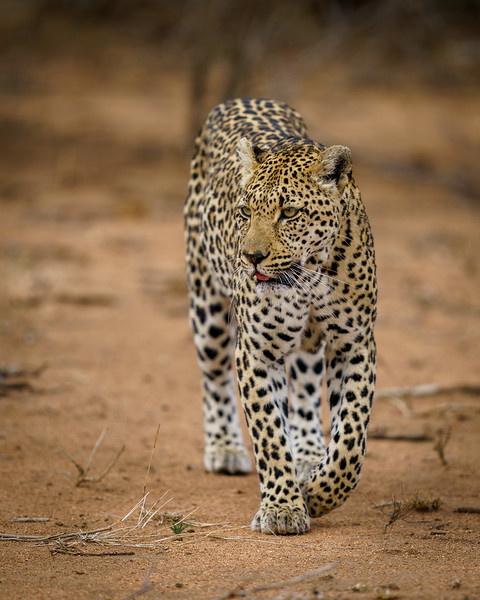 LeopardHills-20191029-1675.jpg