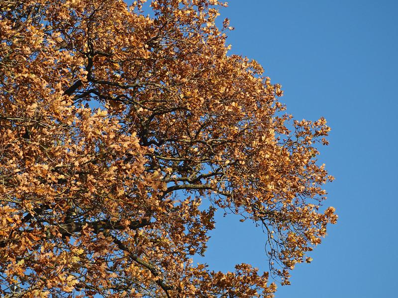 Tree colour