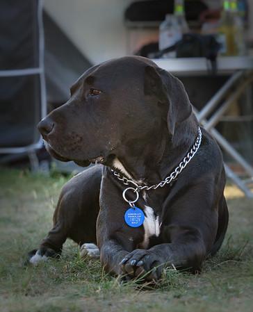 Karens Dogs 2021