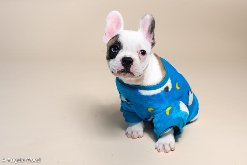 Puppies52.jpg