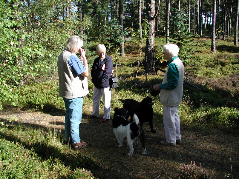 Doreen and Sparky meet friends in the woods at Grantown-on-Spey.  We'd flown to see Aunt Doreen for the last time (she had terminal cancer) soon after my Mum died in 2003.  Sparky (the black and white one) now lives with my brother Allen.